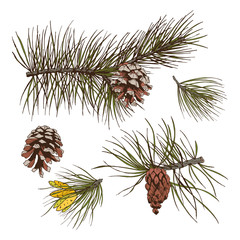 Pine branches colored print