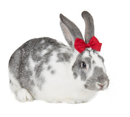rabbit with a bow