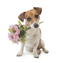 Dog pleasant surprise flower