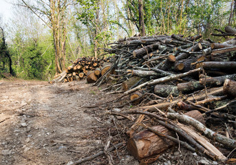 Woodland management or cutting down trees, habitat destruction.
