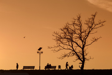 Romantic Couple on a Bench on sunset under a tree