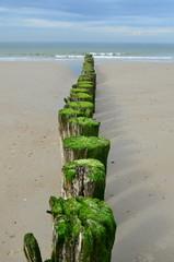 Fototapete - Wooden breakwaters on the beach in Nieuw Haamstede Zeeland