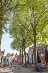 Wall Mural - Cobblestones and Trees
