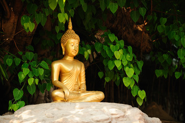 Meditation Buddha statue. Under the banyan tree