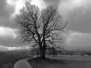 lonely tree in storm