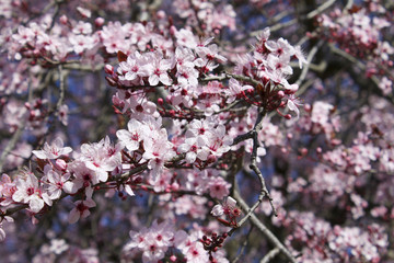 tree with pink flowers in spring time