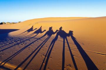 Camels shadows over Erg Chebbi at Morocco