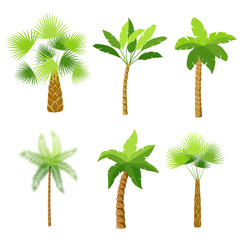 Decorative palm trees icons set