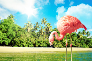 Foto op Canvas Flamingo Pink flamingo in the water on a tropical scenery