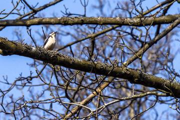 Woodpecker sitting on a branch in a tree