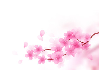 Cherry Blossom Branch Vector