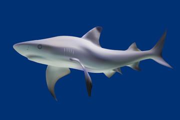 Shark. Vector illustration. Isolated on blue