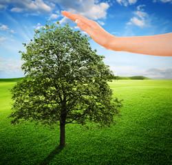 Ecosistema e Natura