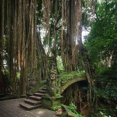 Bridge in monkey forest Ubud, Bali, Indonesia