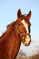 Brown horse portrait in rural area
