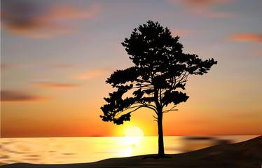 single pine tree silhouette at sunset near sea