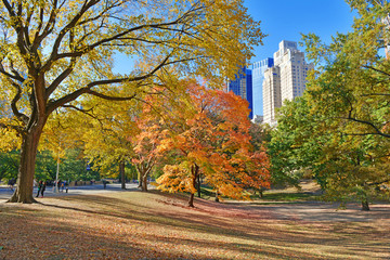 Autumn Color, Fall Foliage in Central Park, Manhattan New York
