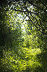 A narrow path in the fairy forest