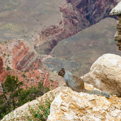 Wall Mural - Grand Canyon Squirrel
