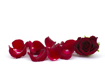 rose petals with red rose