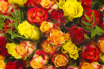 A bouquet of multicolored roses