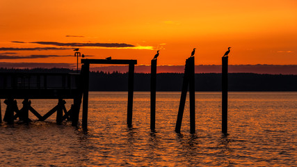 Birds perched on pier in orange sunset