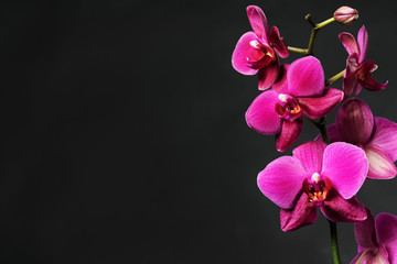 Tuinposter Orchidee pink orchid on black
