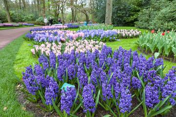 Fototapete - Keukenhof Garden- Lisse- Netherlands
