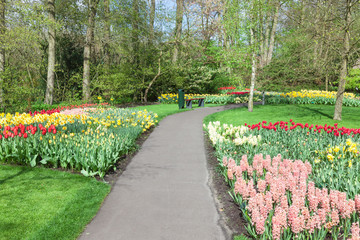 Fototapete - Colorful flowers in Keukenhof Garden, Lisse, Netherlands