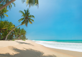 Autocollant pour porte Caraibes Ocean beach with palms in sunny day