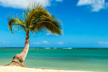 Palm Tree at the Shore
