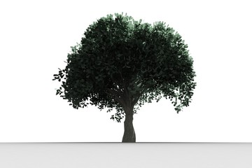 Tree with green leaves growing