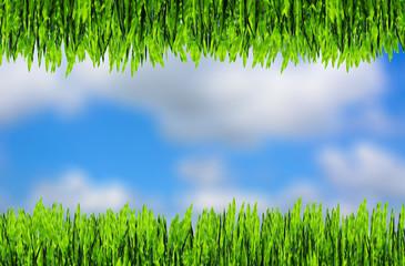 green grass frame on blue sky background