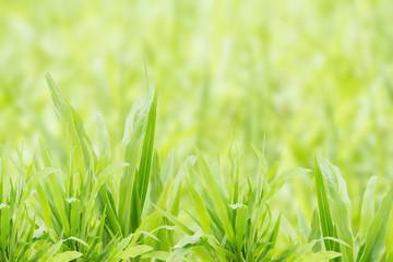 Green grass refreshment in garden