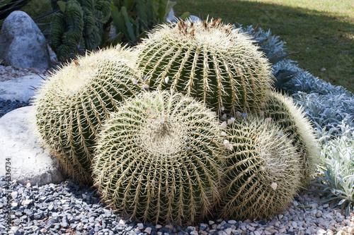 List of desert plants
