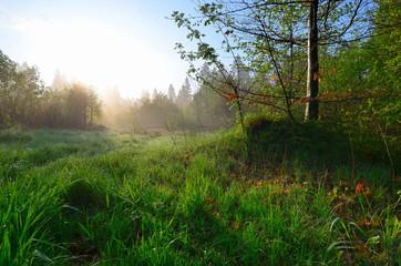 Frühling Morgentau Grashalm