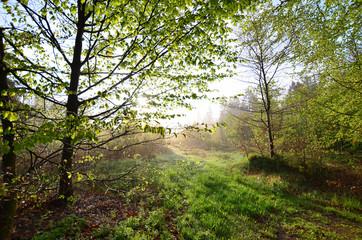 Frühling Morgentau Wiese