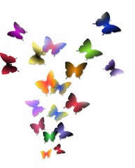 Illustration of flight of colorful butterflies