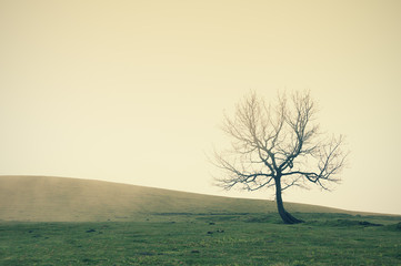 Wall Mural - lonely tree with vintage filter effect