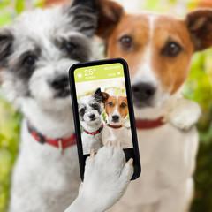 selfie dogs