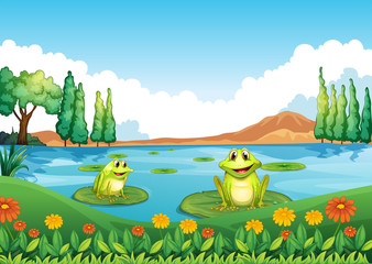 Two playful frogs at the pond