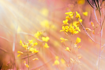 Wild meadow yellow flowers