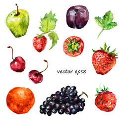 Watercolor fruit for your design.