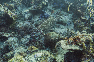 Search photos epinephelus itajara for How much does it cost to get a fishing license
