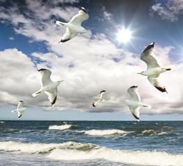 Fototapete - Freiheit: Möwen am Meer :)