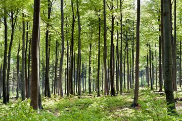 springSeasonForest