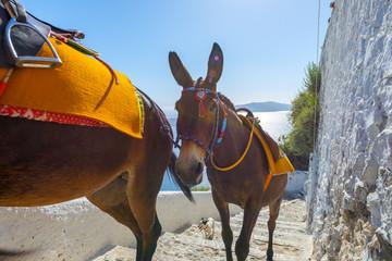 Fototapete - Greece Santorini island in Cyclades, Donkeys waiting for tourist