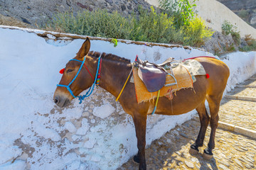 Tuinposter Ezel Greece Santorini island in Cyclades, Donkeys waiting for tourist