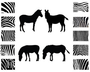 Silhouette of zebra and print of skin, vector