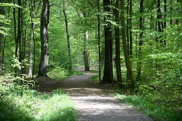 Wall Murals Forest Waldweg im Frühling